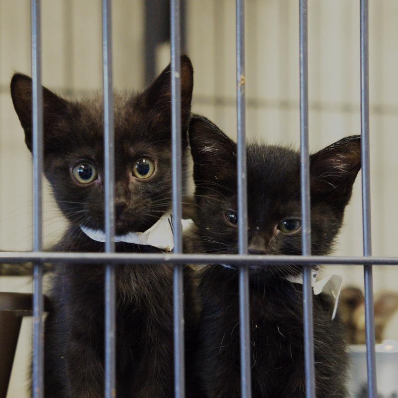 Panel Adoptable Pets Cats