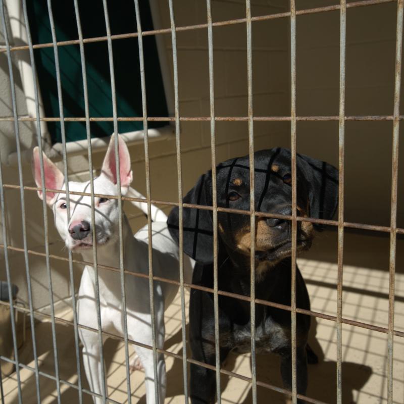 Panel Donate Animal Care