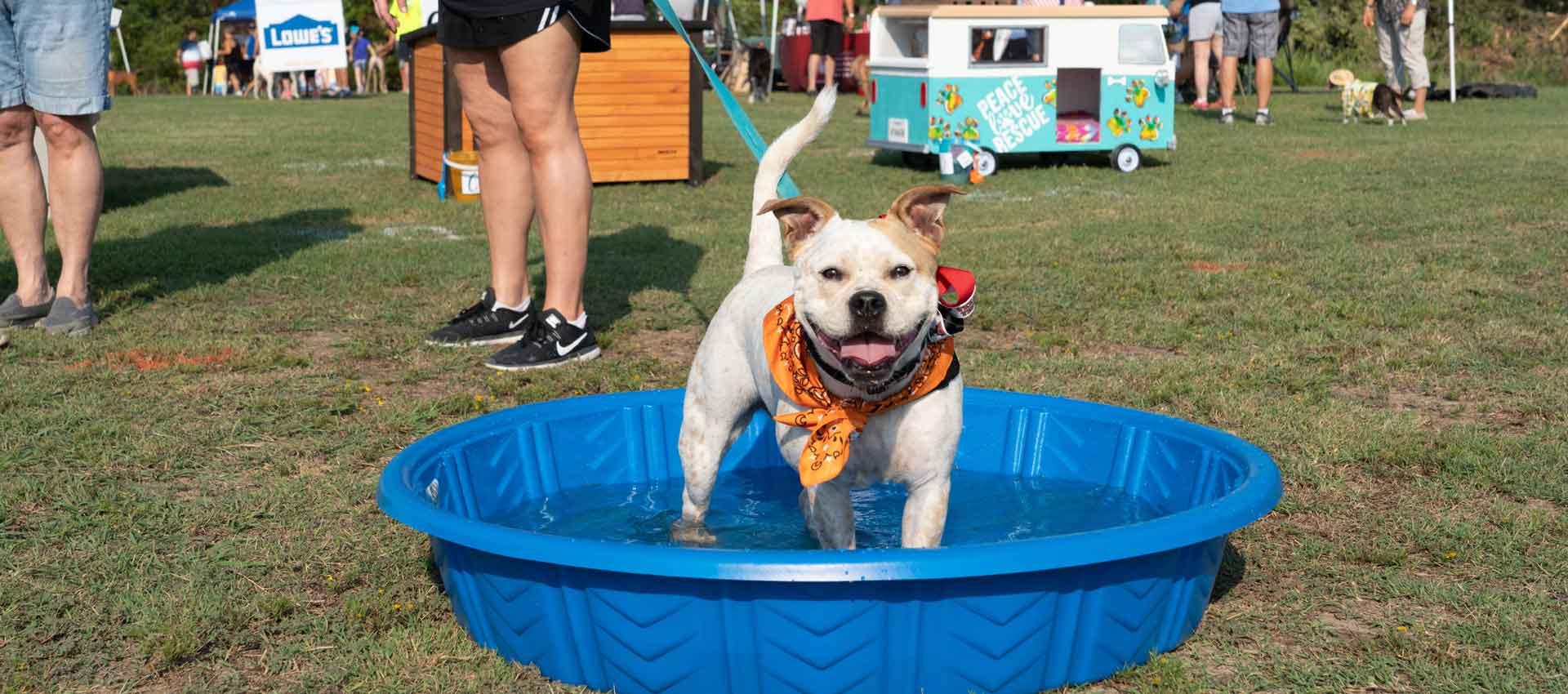 Panel Dog Pool 1