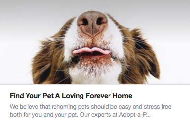 Rehome with Adopt a Pet