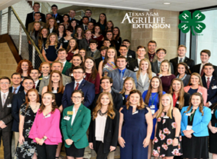 4-H'ers awarded $2.4M in scholarships at Texas 4-H Roundup