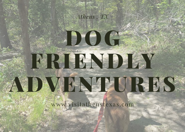 Dog-Friendly Adventures