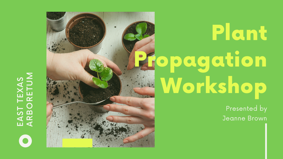 Plant Propagation Workshop