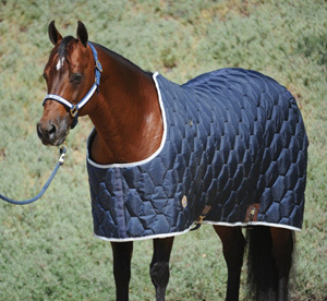Northwest Stable Blanket
