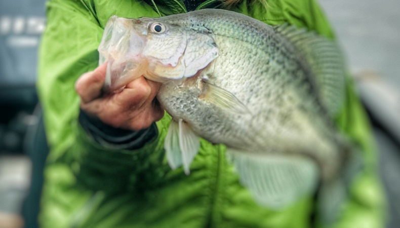 Cedar Creek Lake Fishing w/ BigCrappie.com & DallasFishingCharters
