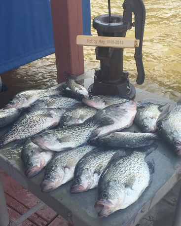 Murray Crappie