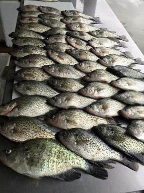 Lynch Nice Crappie
