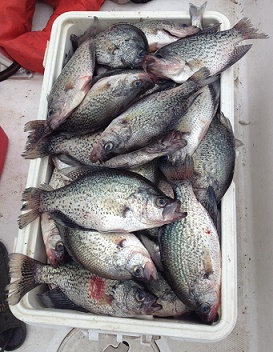 Cooler of Crappie