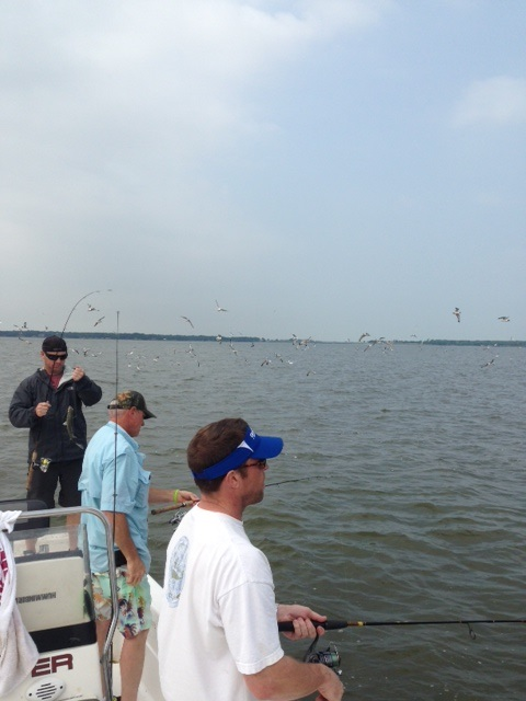 05-09-2014 Graybar and the birds with BigCrappie