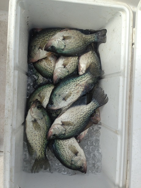 09-10-14 Crappie in the Cooler with BigCrappie CCL