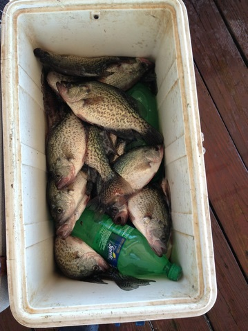 Hughes Trip Cooler full of Crappie