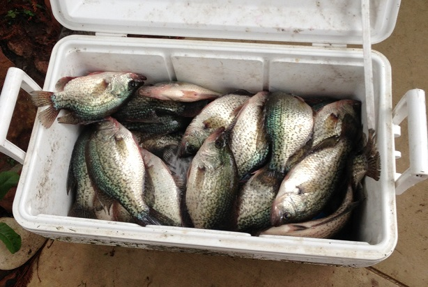 Chuck & Chris' Cooler of Crappie