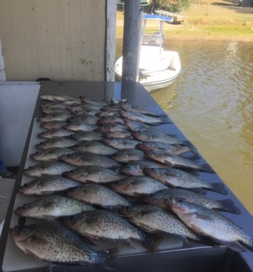 Swofford Crappie