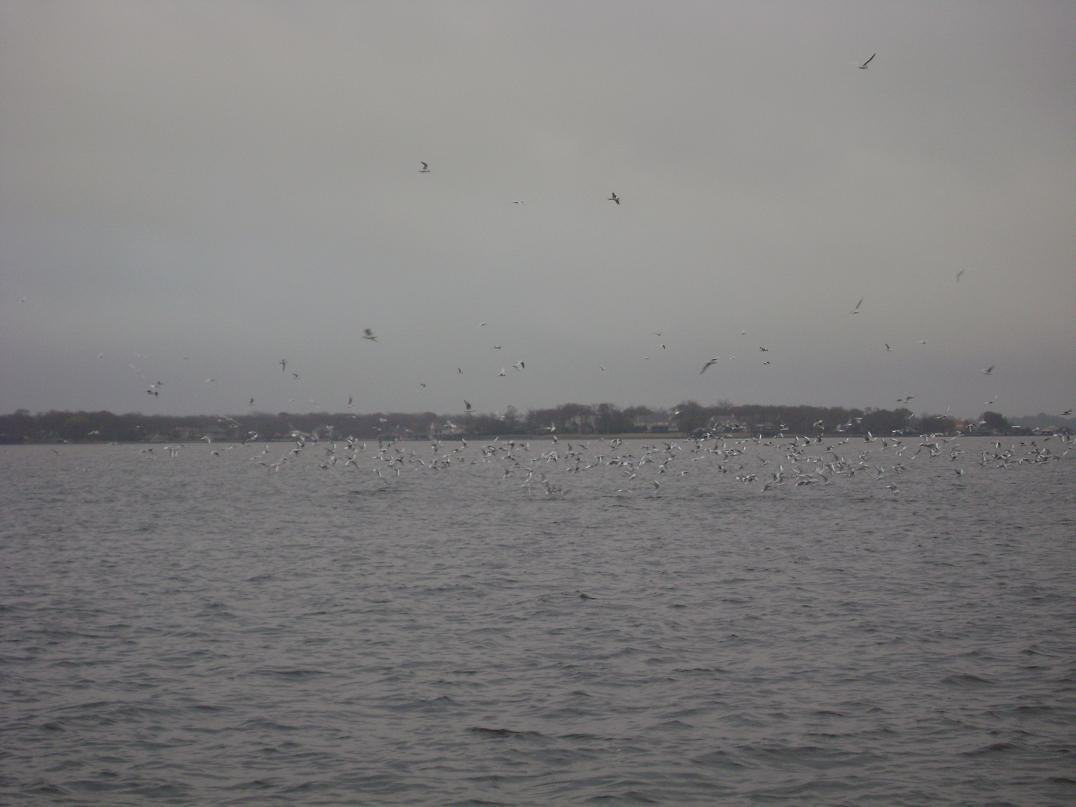 12/8/2009