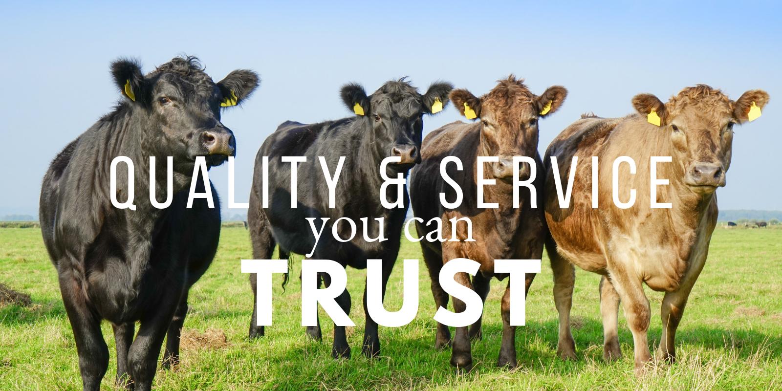 We are Big V Feeds | Big V Feeds provide a full line of livestock