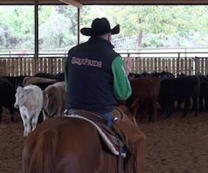 NCHA Hall of Fame cutting horse trainer Dave Stewart gives a lesson on making better cuts.