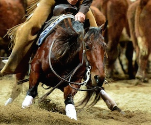 Todd Graham wins 2014 NCHA Australia Open Derby, Open Classic Challenge & Gold Cup