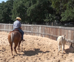 Joey Sucamale: How To Practice for a Ranch Sorting When You Don't Have Any Help