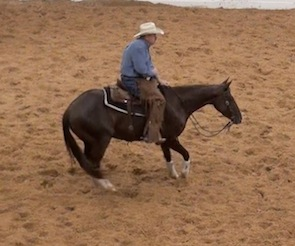 How to use the turn-around in between cuts to tune the cutting horse during a run.