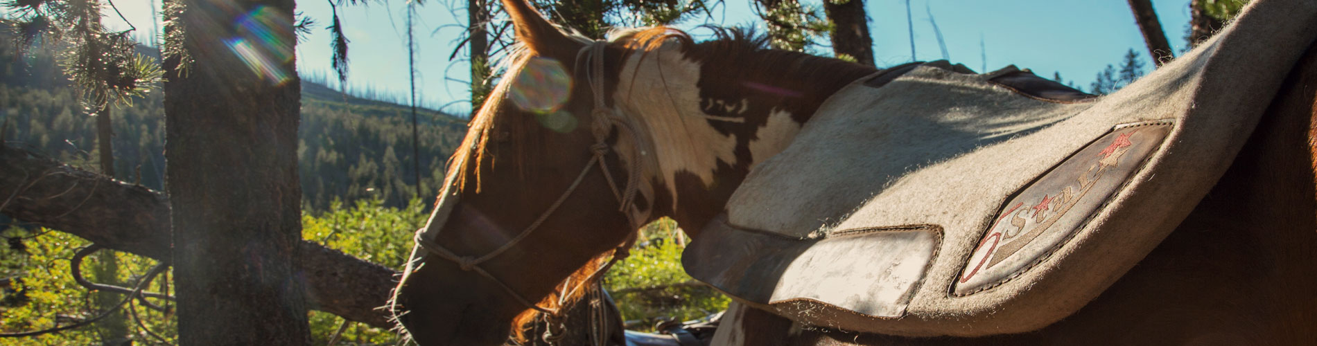 Saddle Pads & What Manufacturers Don't Tell You | 5 Star