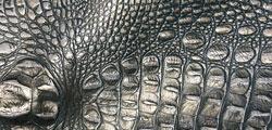 Silver Croc