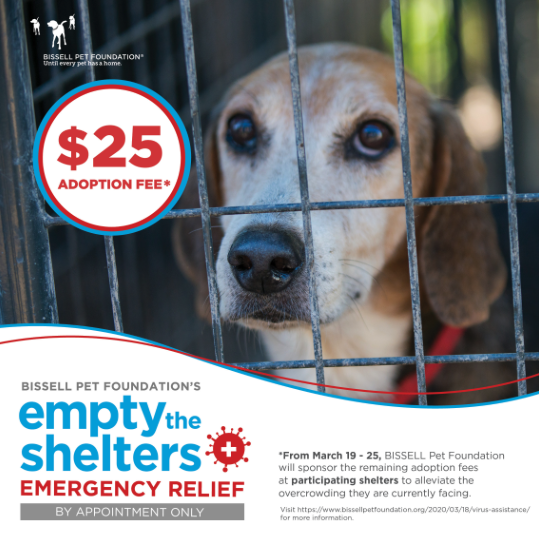 $25 Adoption Fee Plus a Free Microchip Extended Until April 8th!