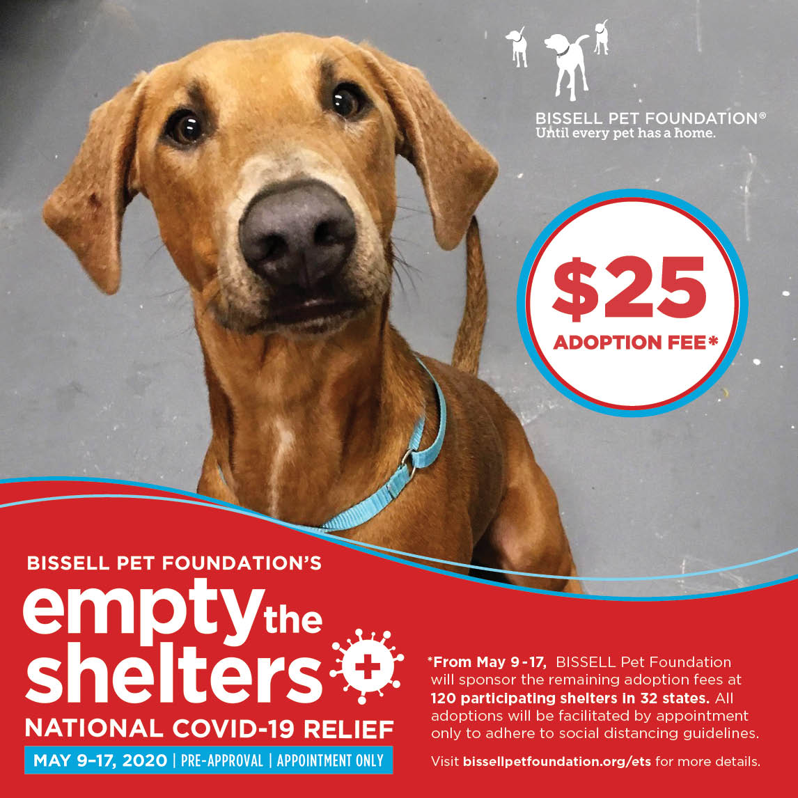 $25 Adoption Fee with $5 Microchip!