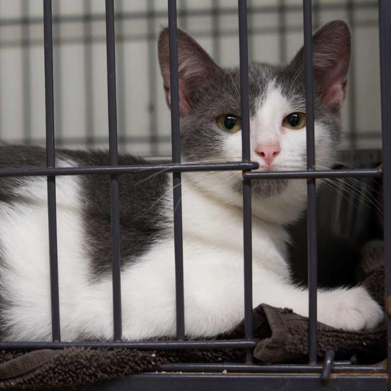 Panel Adoptable Pets Cat