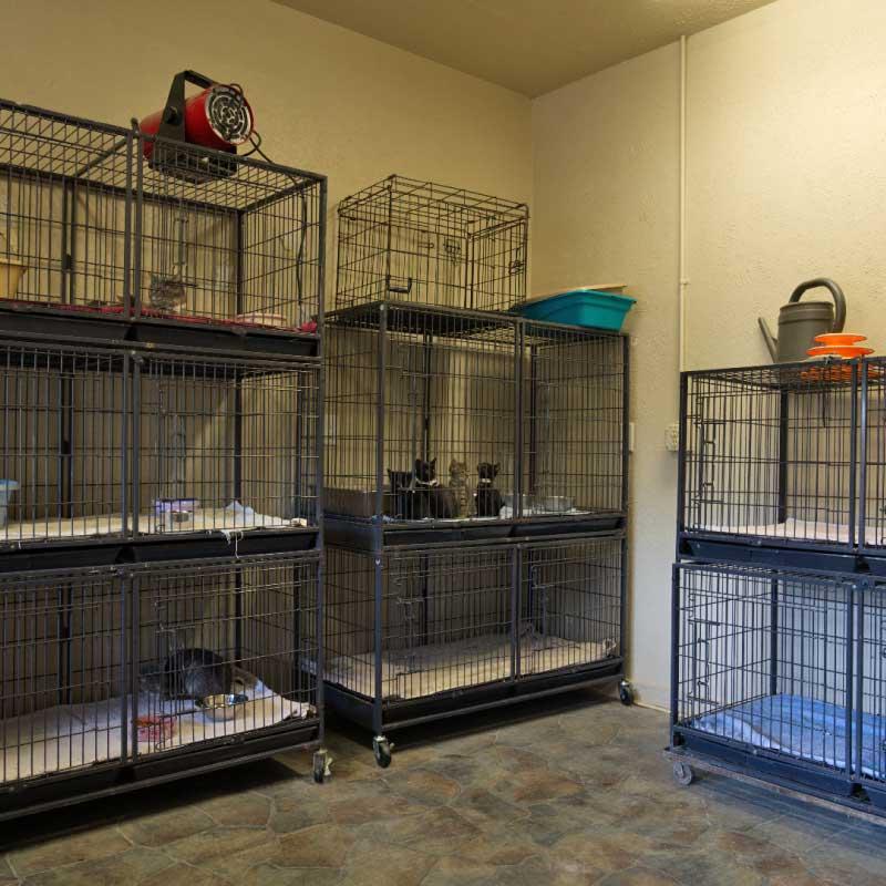 Panel Donate Cat Room