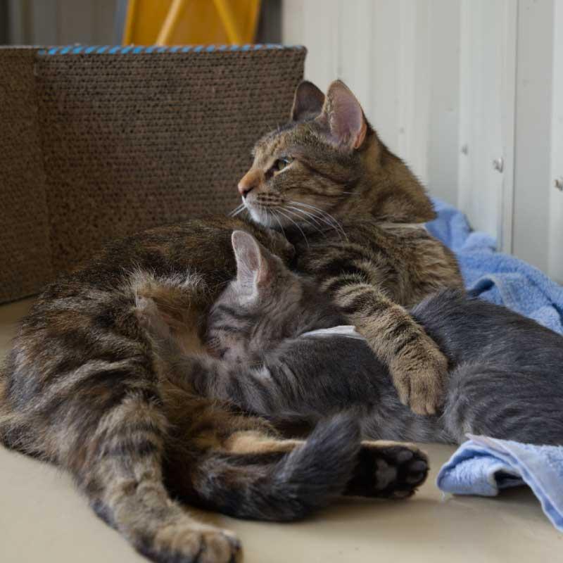 Panel Donate Kitten