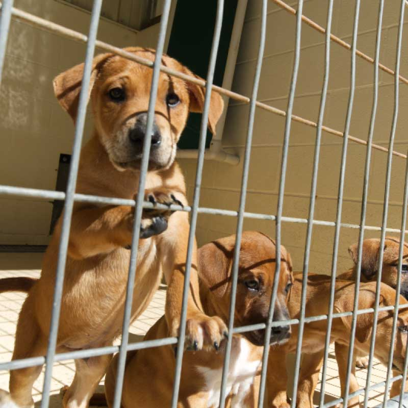 Panel Donate Puppies