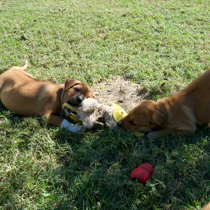 Panel Donate Puppy Play