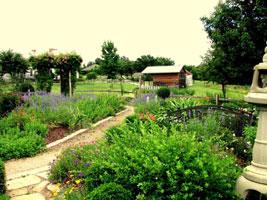 Attractions Arboretum