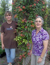 Landscaping: Carol and Carin