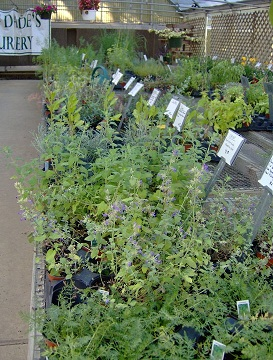 Quality Plants: herbs