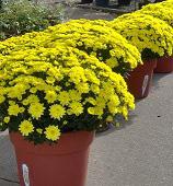 Quality Plants: perennials
