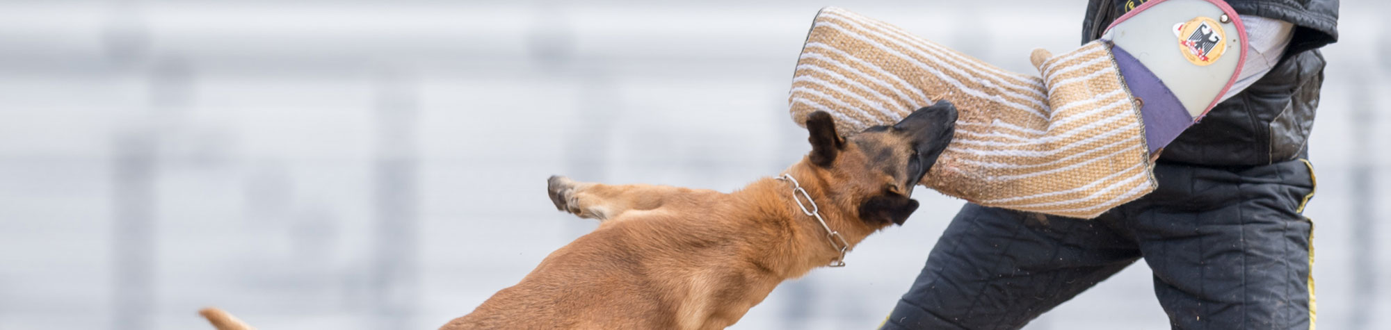 Breeding quality dogs