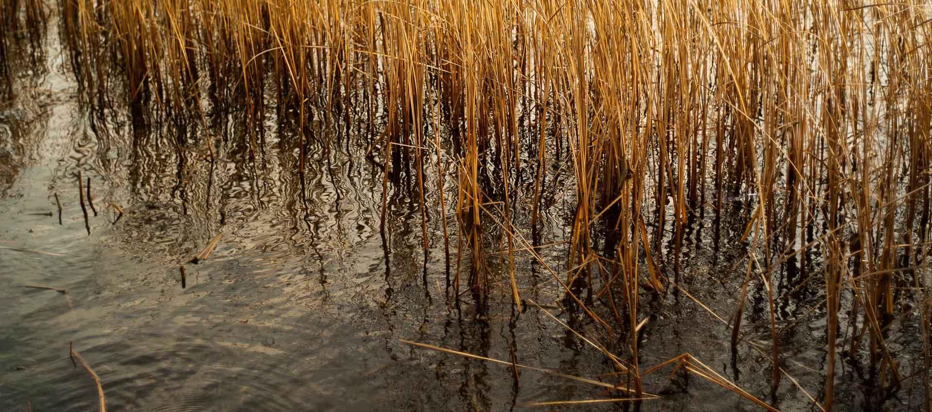 Slider River Reeds