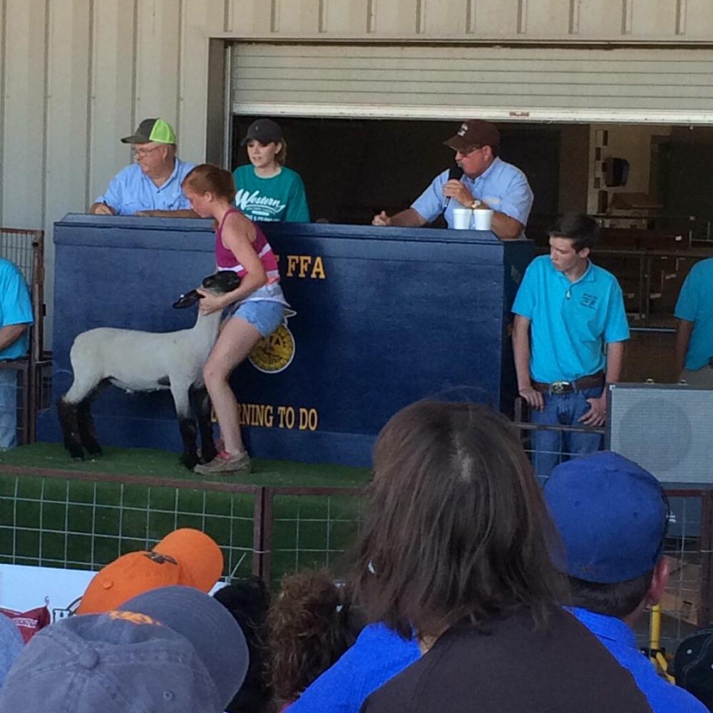 30th Annual Rehab Show Lamb & Meat Goat Sale (2019)